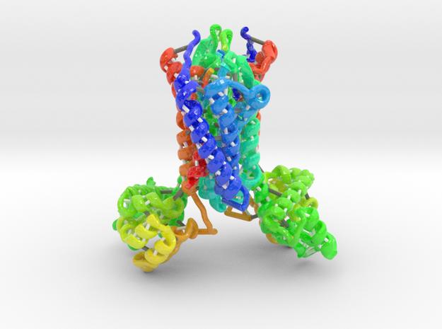 Chemokine Receptor in Coated Full Color Sandstone