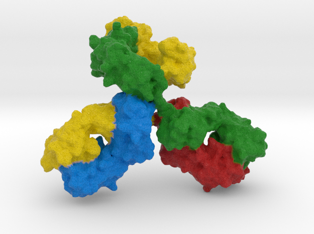 Immunoglobulin Antibody in Full Color Sandstone