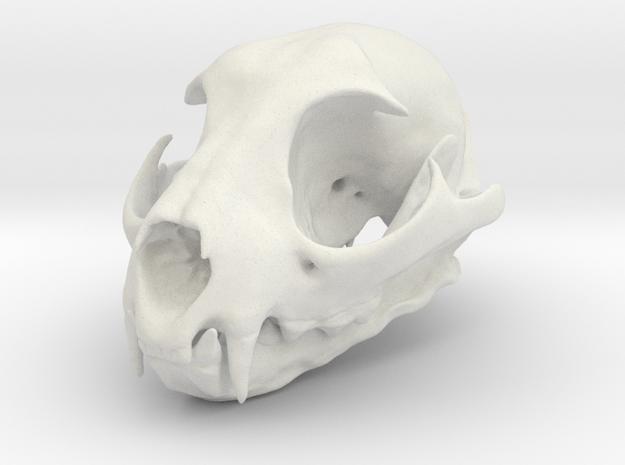 Bobcat Skull - Closed Jaw Statue in White Natural Versatile Plastic