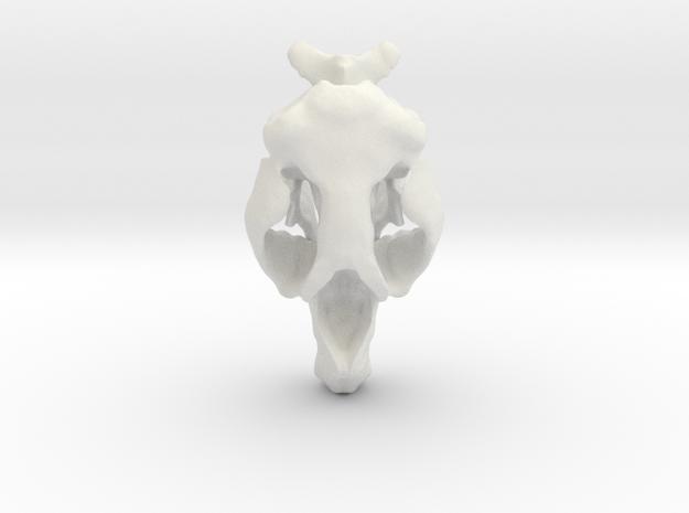 Hydrodamalis Skull- Stellers Seacow in White Natural Versatile Plastic