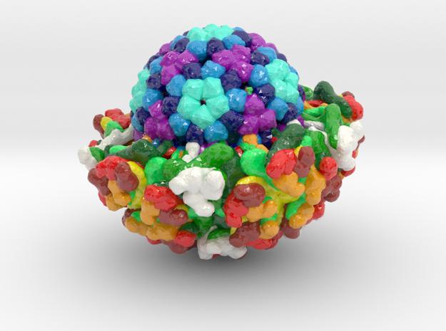 Venezuelan Equine Encephalitis Virus (Large) in Glossy Full Color Sandstone