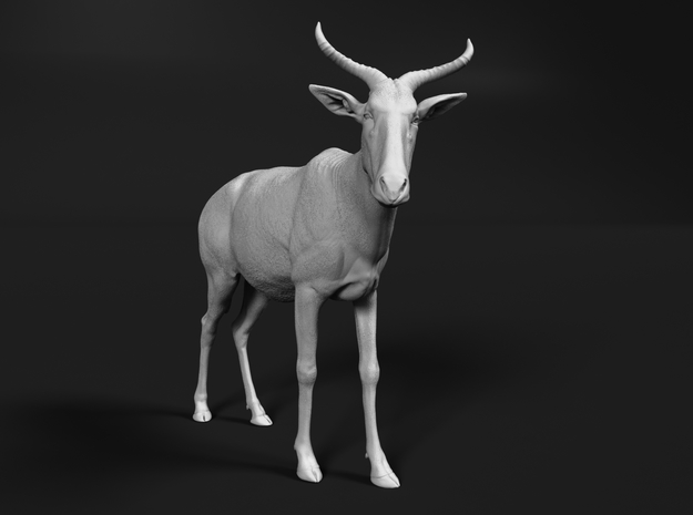 Tora Hartebeest 1:25 Standing Male in White Natural Versatile Plastic