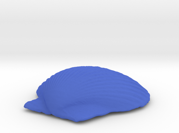 Large Seashell in Blue Processed Versatile Plastic
