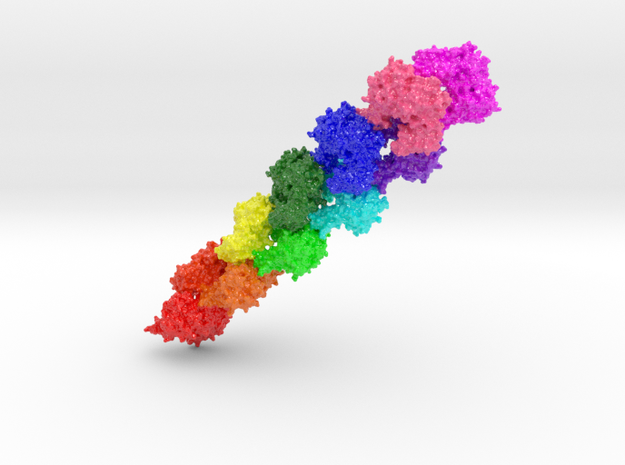 Actin Microfilament (Large) in Glossy Full Color Sandstone