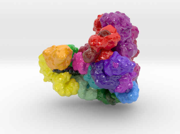 Anaphase-Promoting Complex (Cyclosome) in Glossy Full Color Sandstone