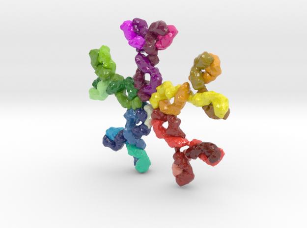 Immunoglobulin M (IgM) in Glossy Full Color Sandstone