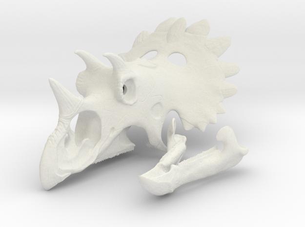 Regaliceratops Skull in White Natural Versatile Plastic