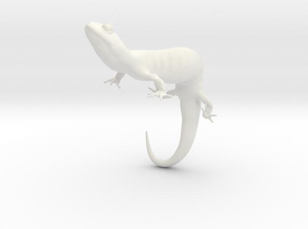 Salamander 6.4cm in White Natural Versatile Plastic