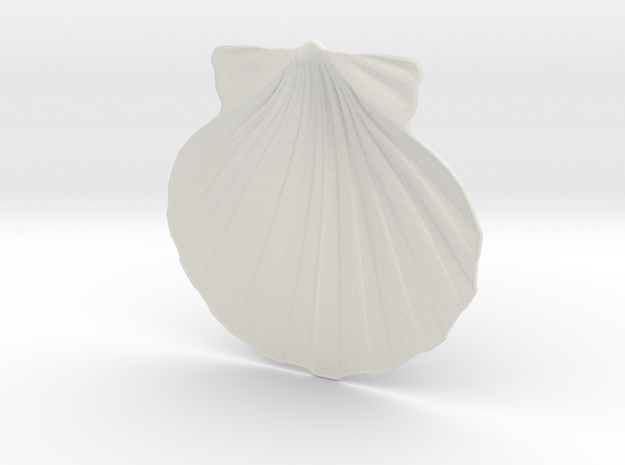 Scallop Shell in White Natural Versatile Plastic