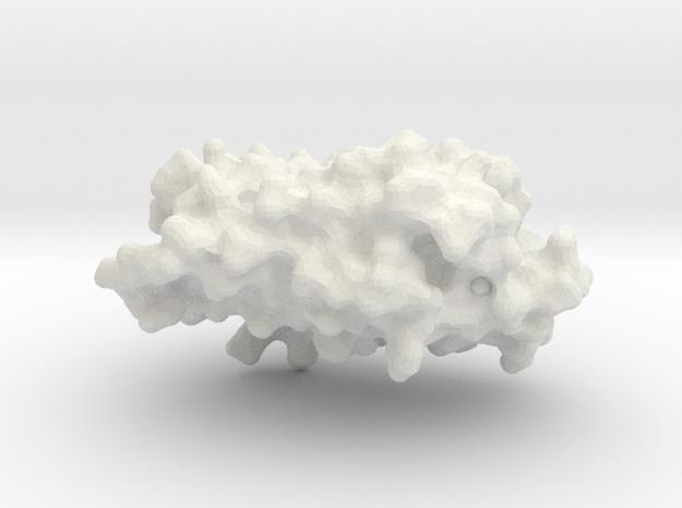 Rhodopsin Photocenter Monomer - Surface Render in White Strong & Flexible