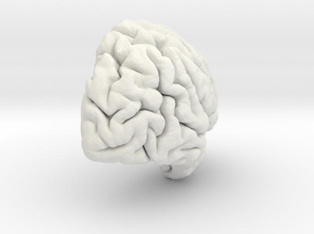 Right Brain Hemisphere 1/1 in White Strong & Flexible