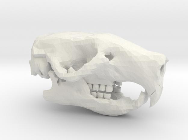 Mouse Skull in White Natural Versatile Plastic