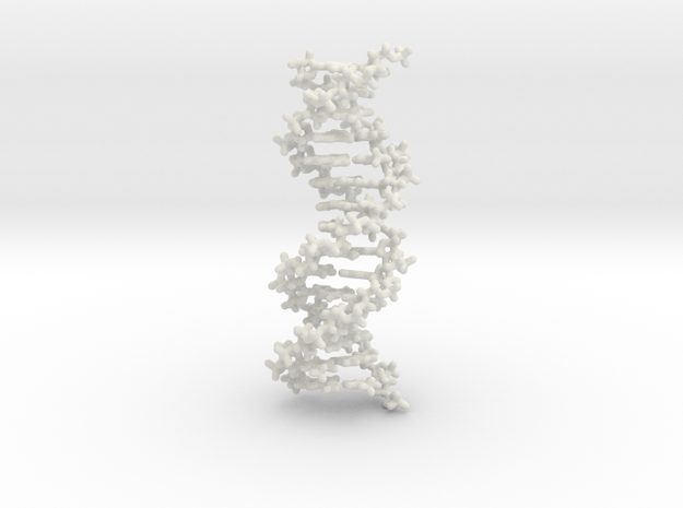 DNA double helix, stick model, 2 separable chains in White Natural Versatile Plastic