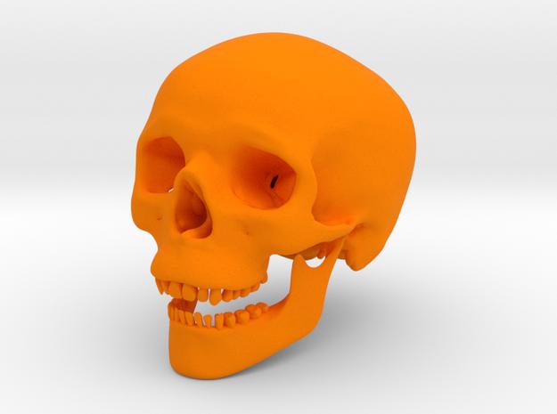 Human Skull -- Small