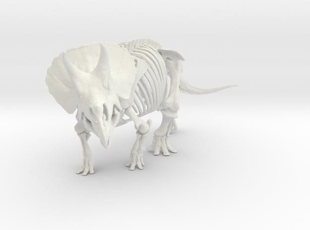 Triceratops horridus skeleton 1:40 scale