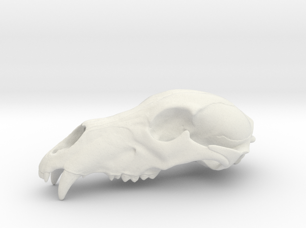 Bear Skull. WT-07. 6cm.  in White Natural Versatile Plastic