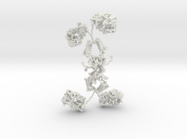 Antibody - IgA1 - dimer in White Natural Versatile Plastic