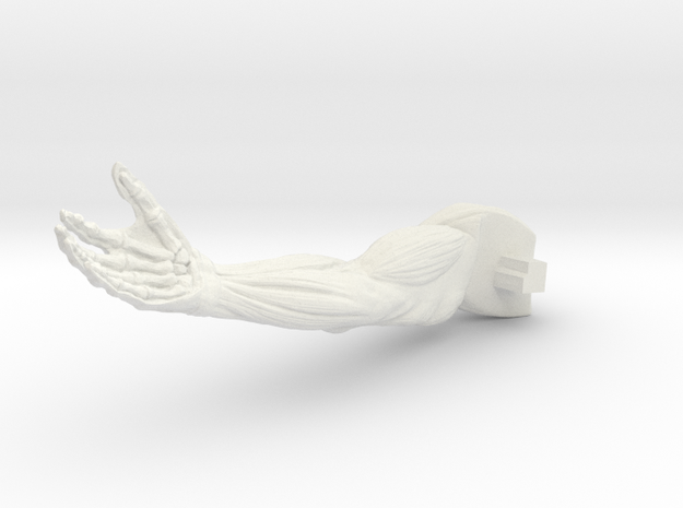 AnatomyR-arm in White Natural Versatile Plastic