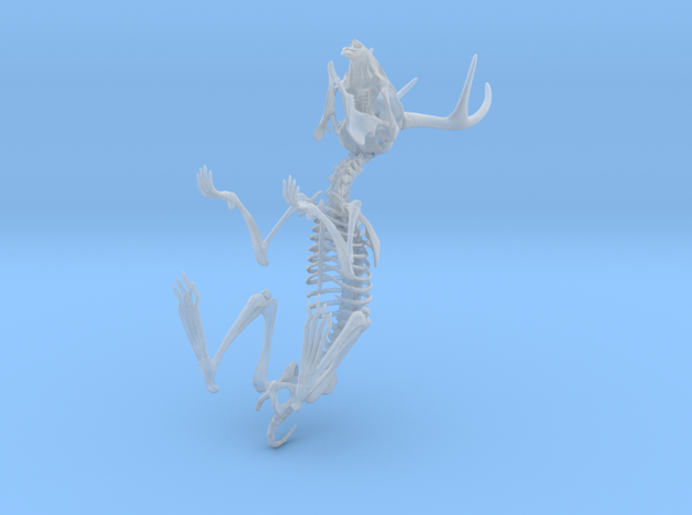 Jackalope Skeleton