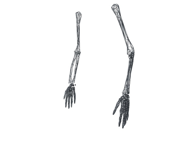 Life Size Poly Arms and Hands - Skeleton in White Natural Versatile Plastic