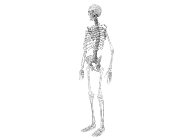 Life Size Poly Hip - Skeleton 3d printed 6ft. Full Skeleton in White - All parts available in store