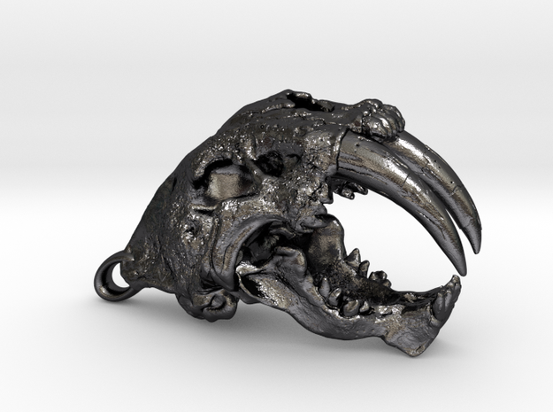 Skull of a saber-toothed Cat