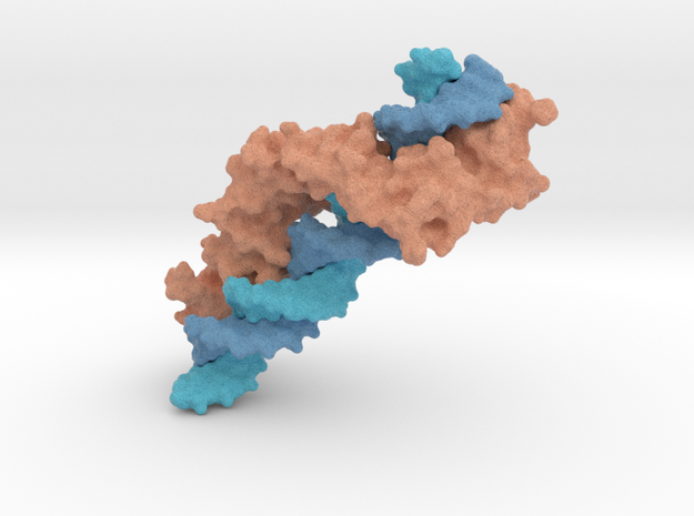 Zinc Fingers bound to DNA in Full Color Sandstone