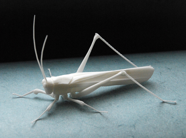 Articulated Katydid in White Strong & Flexible