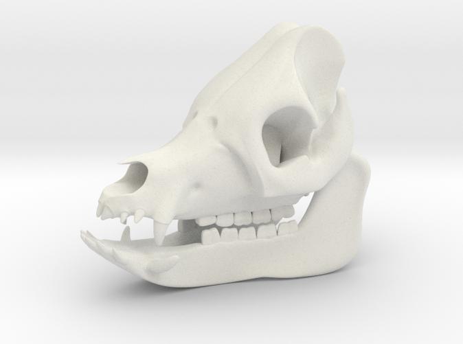 Pig Skull 3D Printed Model