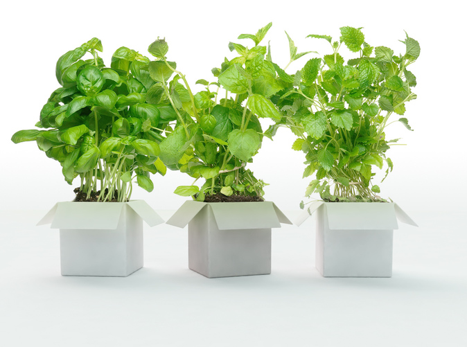 visualisation with herbs
