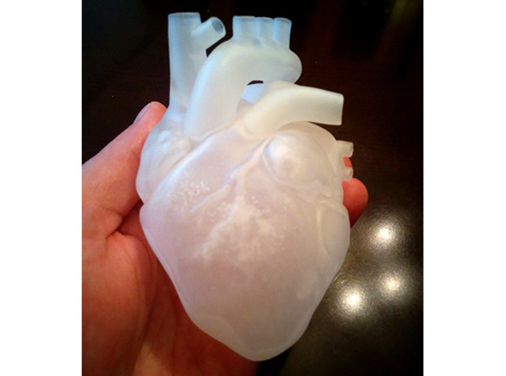 Anatomical Heart 3d printed Anterior view