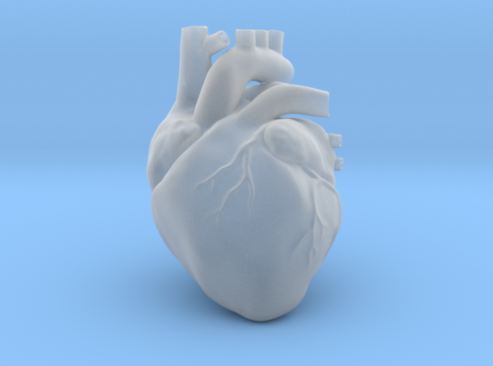 Anatomical Heart 3d printed