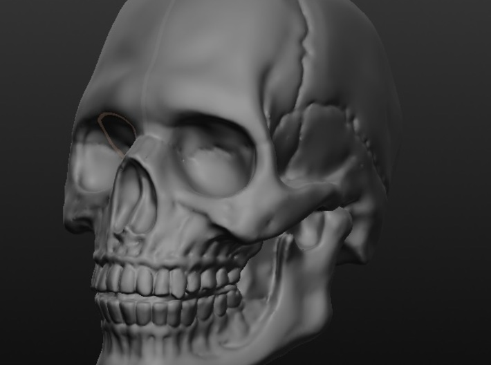 Human Skull (with jaw) 8 inch scale 3d printed