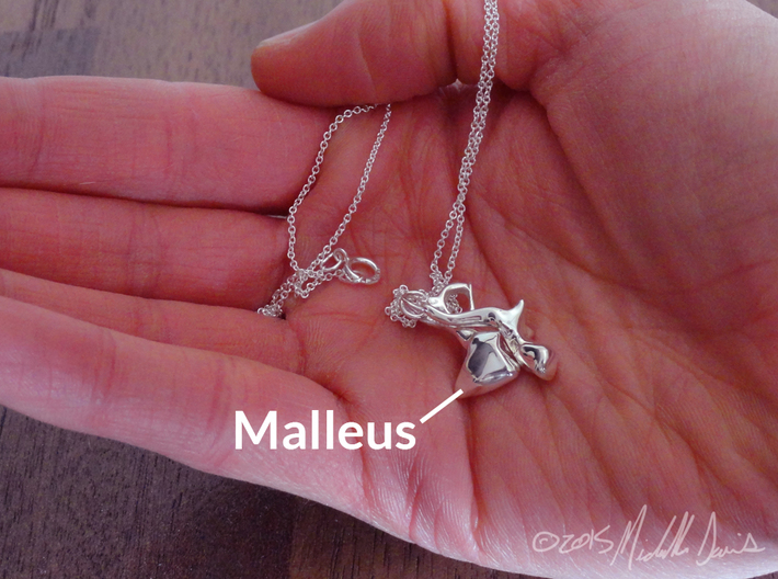 Ossicle Pendant - Malleus (right sided) 3d printed IMPORTANT: This listing is for the malleus ONLY