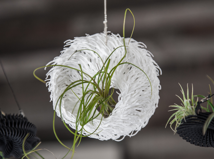 Bulbophyllum Mobius Planter 3d printed Tillandsia species: T. diaticha minor
