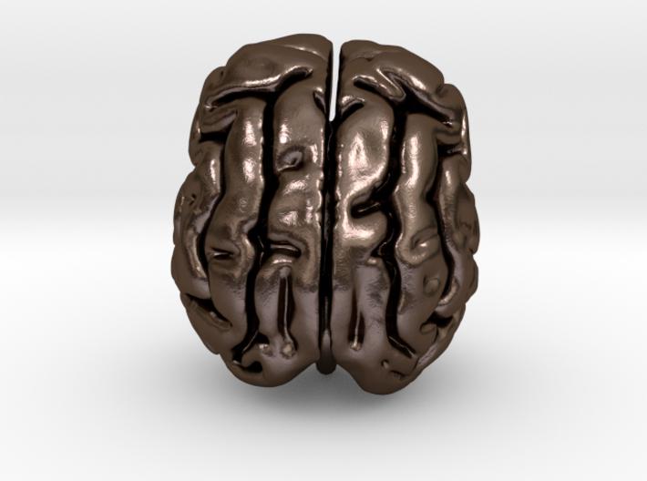 Cheetah brain 3d printed