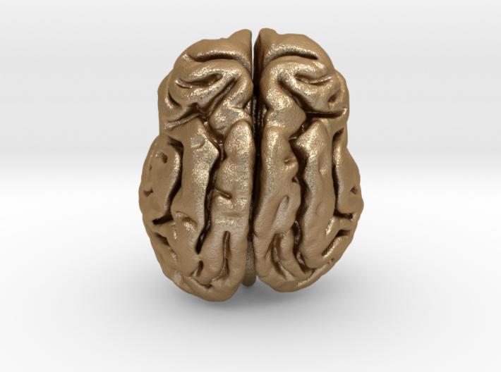 Leopard brain 3d printed