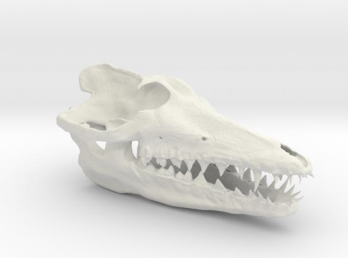 Pakicetus skull 3d printed