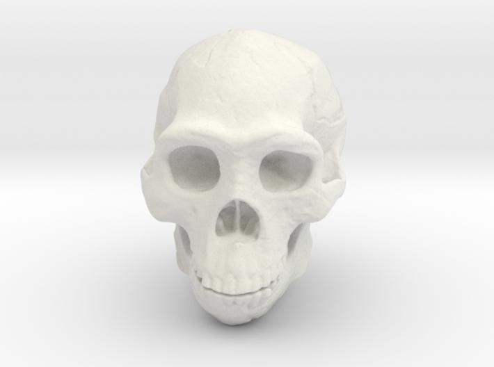Real Skull : Homo erectus (Scale 1/1) 3d printed
