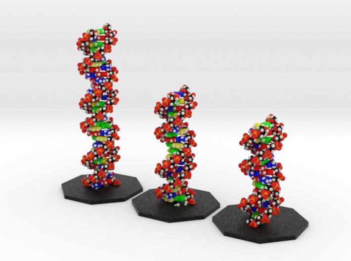 DNA Models Elizabeth, Sheryl and Emily 3d printed