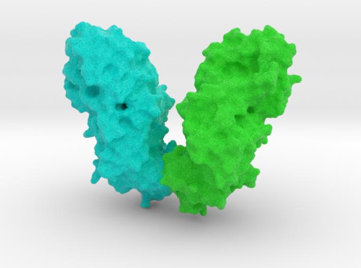 Diptheria Toxin 3d printed