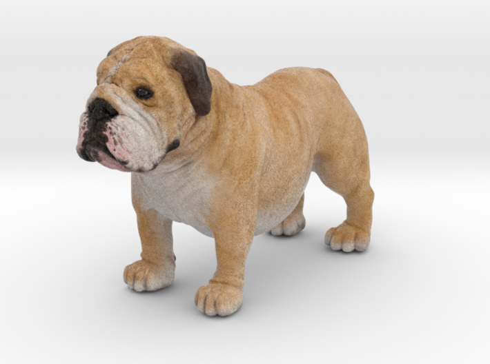 Bull Dog mini size (color) 3d printed