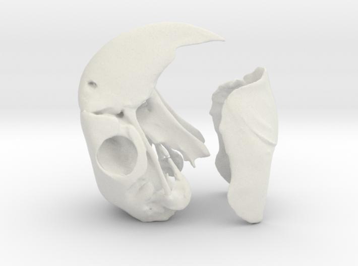 Macaw Skull 3d printed