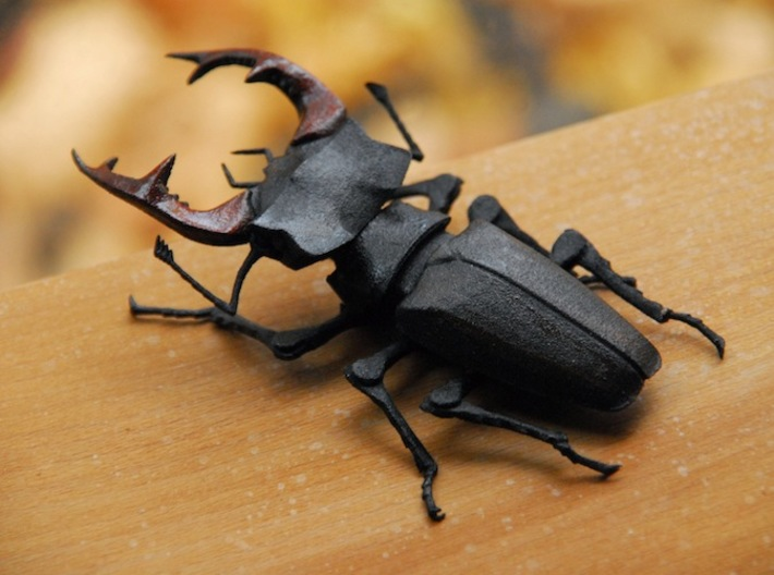 Articulated Stag Beetle Lucanus Cervus Xpaan2cml By