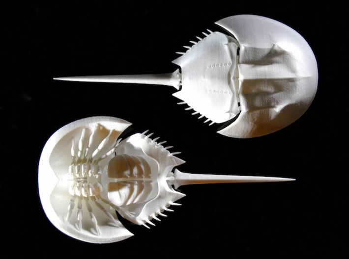 Articulated Horseshoe Crab (Limulus polyphemus) 3d printed