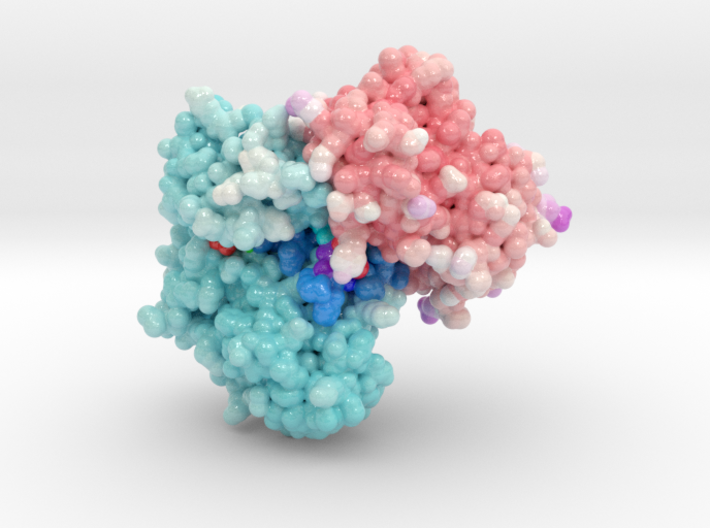 Structure of PCDK2/CYCLINA bound to ADP and 1 MAGN 3d printed