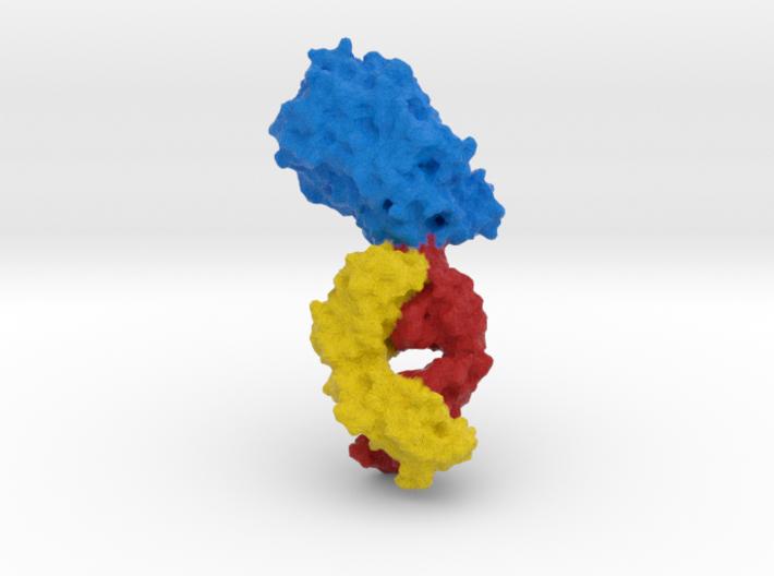 Dopamine Transporter 3d printed