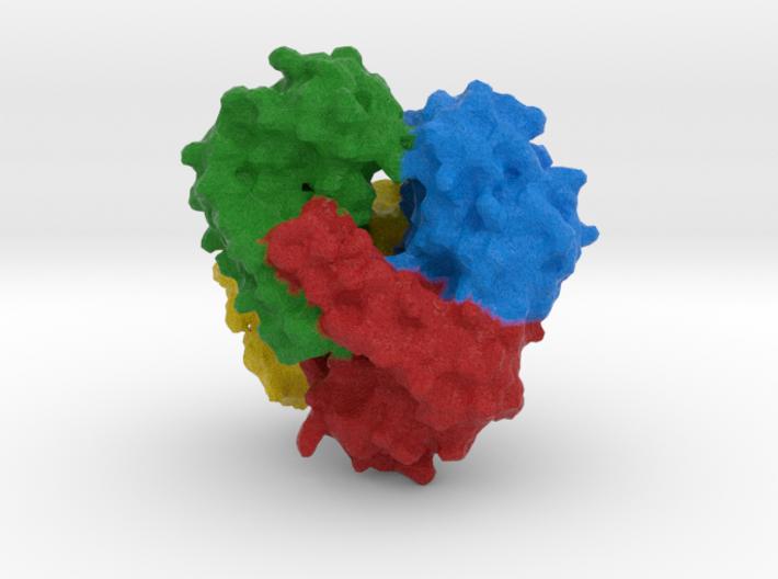 Superoxide Dismutase 3d printed
