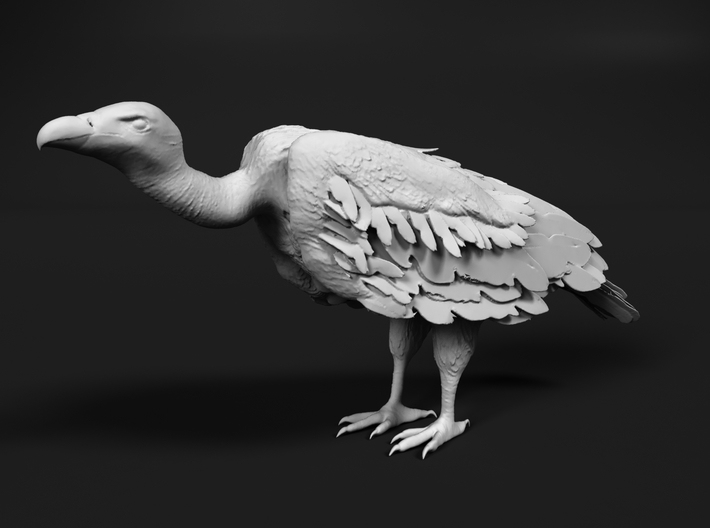 White-Backed Vulture 1:9 Standing 1 3d printed