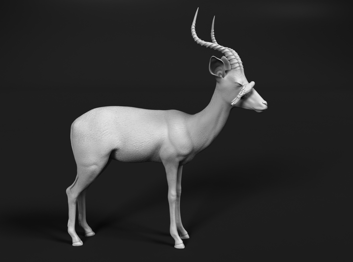 Impala 1:22 Male with Red-Billed Oxpecker 3d printed